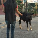 animal lovers in ghaziabad